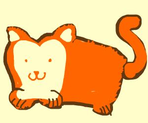 fluffy loaf cat