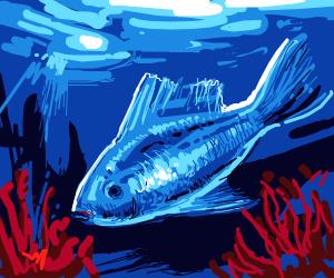 Little blue fish