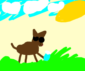 Malnourished dog is playing in the grass
