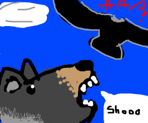 Wolf scarying a brid away