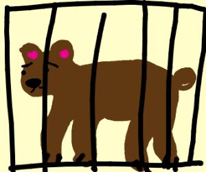 Cuputured bear