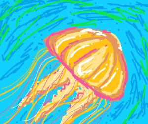 Pacific Sea Nettle (type of jellyfish)