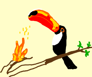 Toucan breathing fire?