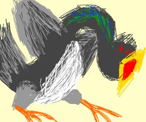 pigeon dragon