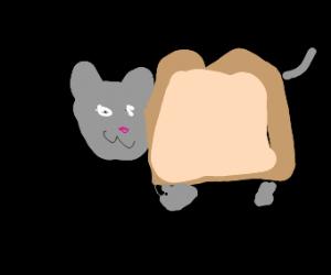 Happy Cat/Toast hybrid