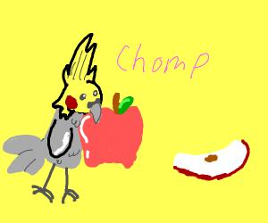 parrot eats a apple
