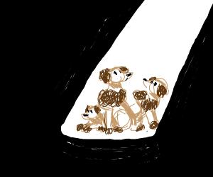 poodles in the spotlight