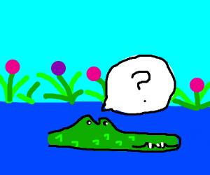 Confused alligator.