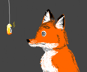 Hypnotizing a fox