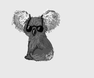 Cool-Ass Koala