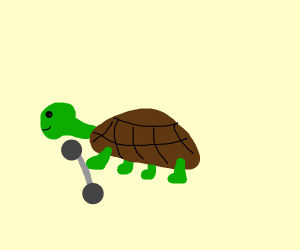 turtle carrying weights
