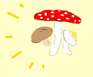 MUSHROOOMS!