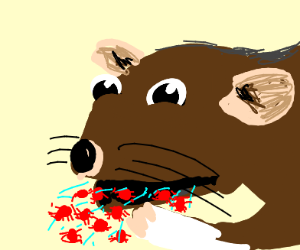 rat coughing up red spiders