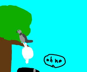 big bird does a huge poop