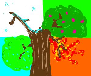Four seasons on one tree
