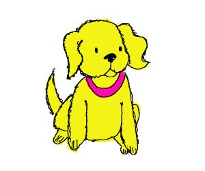 Yellow Pup