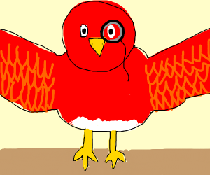 A large fancy red bird