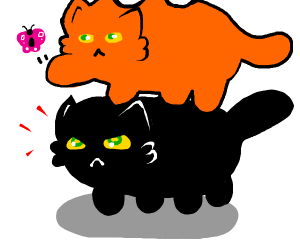 orange getting a butterfly on a mad black cat