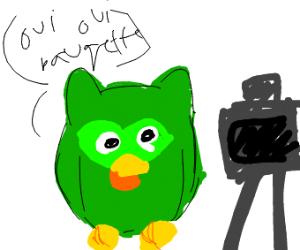 birds speak french to camera
