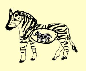 An inverse zebra in a normal zebra