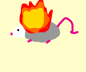 A possum on fire