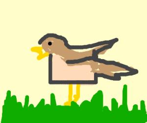 Square Nightingale