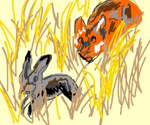 A fox approaches a rabbit