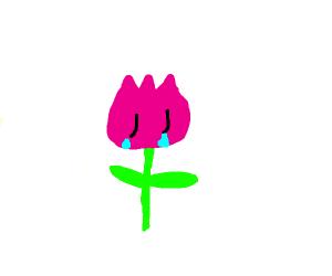 depressed flowerman