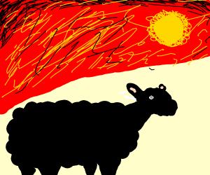 black sheep on a sunset