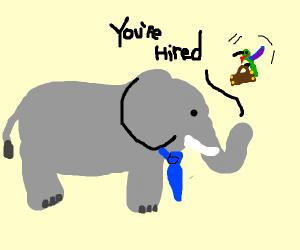 Elephant hiring Hummingbird