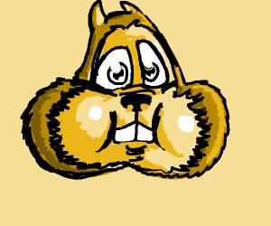 A chipmunk's head
