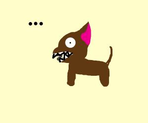 dog eats spring