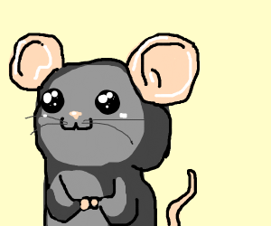 A cute mouse