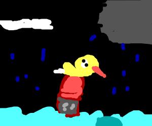 Duck riding gator across water
