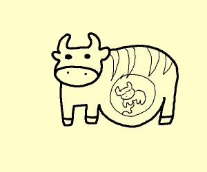 pregnant striped cow