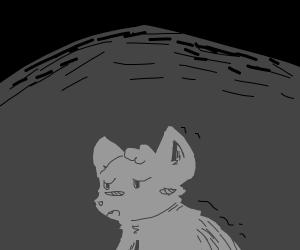 sad wolf in the dark