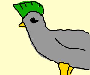 Punk Pigeon