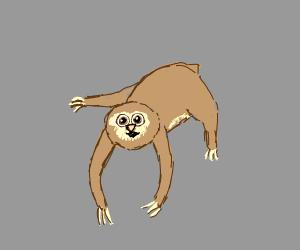 a cute sloth ♡