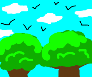 Birds, sky and trees