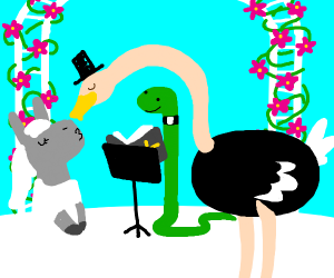 Ostrich+donkey married by snake priest