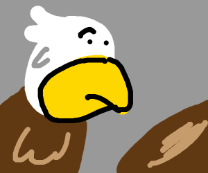 Eagle inspecting nest