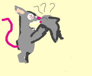 Weird mouse eating a confused rat