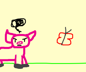 pig hates butterfly