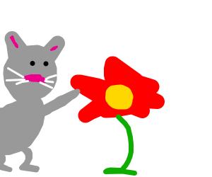 Cat Bops Flower