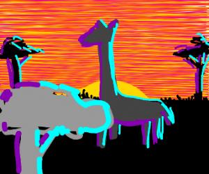 girafe in a sun set