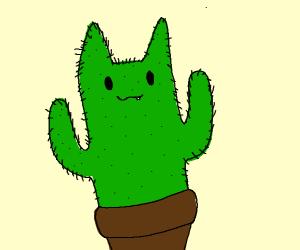 Cat-ctus