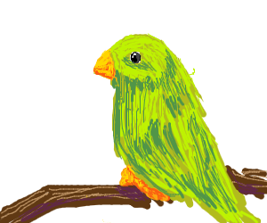 a green bird that is very calm