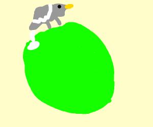 Pigeon on an Alien Planet
