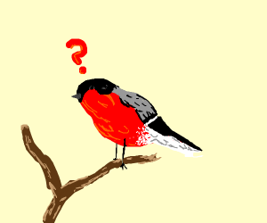 confused red birb