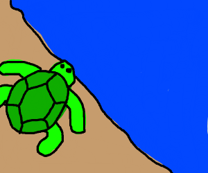 Lovly Turtle Gazing Over the Ocean